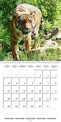 Tiger - The Beautiful Predator (Wall Calendar 2019 300 × 300 mm Square) - Produktdetailbild 11