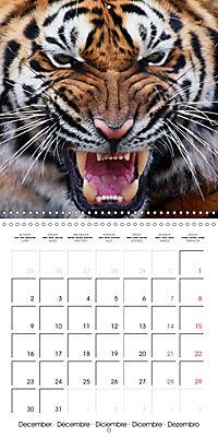 Tiger - The Beautiful Predator (Wall Calendar 2019 300 × 300 mm Square) - Produktdetailbild 12