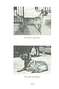 Tipps vom Hundeflüsterer - Produktdetailbild 5