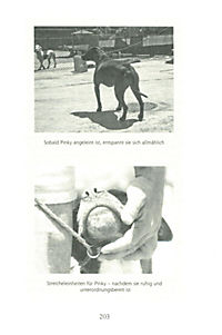 Tipps vom Hundeflüsterer - Produktdetailbild 8