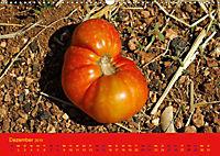 Tomatenkalender 2019 (Wandkalender 2019 DIN A3 quer) - Produktdetailbild 12