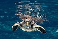 Tortuga - Die unglaubliche Reise der Meeresschildkröte - Produktdetailbild 6