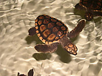 Tortuga - Die unglaubliche Reise der Meeresschildkröte - Produktdetailbild 9