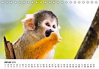 Totenkopfaffen (Tischkalender 2019 DIN A5 quer) - Produktdetailbild 1