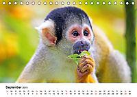 Totenkopfaffen (Tischkalender 2019 DIN A5 quer) - Produktdetailbild 9