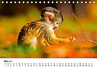 Totenkopfaffen (Tischkalender 2019 DIN A5 quer) - Produktdetailbild 5