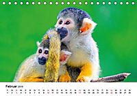 Totenkopfaffen (Tischkalender 2019 DIN A5 quer) - Produktdetailbild 2