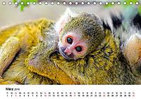 Totenkopfaffen (Tischkalender 2019 DIN A5 quer) - Produktdetailbild 3
