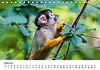 Totenkopfaffen (Tischkalender 2019 DIN A5 quer) - Produktdetailbild 6