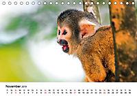 Totenkopfaffen (Tischkalender 2019 DIN A5 quer) - Produktdetailbild 11