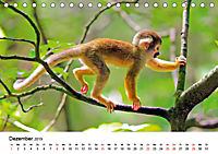 Totenkopfaffen (Tischkalender 2019 DIN A5 quer) - Produktdetailbild 12
