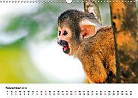 Totenkopfaffen (Wandkalender 2019 DIN A3 quer) - Produktdetailbild 11