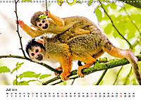 Totenkopfaffen (Wandkalender 2019 DIN A3 quer) - Produktdetailbild 7
