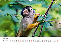 Totenkopfaffen (Wandkalender 2019 DIN A3 quer) - Produktdetailbild 6