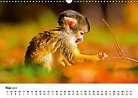 Totenkopfaffen (Wandkalender 2019 DIN A3 quer) - Produktdetailbild 5