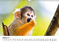 Totenkopfaffen (Wandkalender 2019 DIN A3 quer) - Produktdetailbild 1