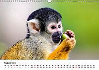 Totenkopfaffen (Wandkalender 2019 DIN A3 quer) - Produktdetailbild 8