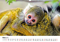 Totenkopfaffen (Wandkalender 2019 DIN A3 quer) - Produktdetailbild 3
