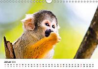 Totenkopfaffen (Wandkalender 2019 DIN A4 quer) - Produktdetailbild 1