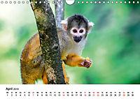 Totenkopfaffen (Wandkalender 2019 DIN A4 quer) - Produktdetailbild 4