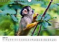 Totenkopfaffen (Wandkalender 2019 DIN A4 quer) - Produktdetailbild 6
