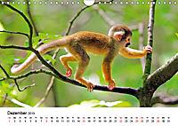 Totenkopfaffen (Wandkalender 2019 DIN A4 quer) - Produktdetailbild 12