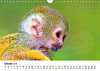 Totenkopfaffen (Wandkalender 2019 DIN A4 quer) - Produktdetailbild 10