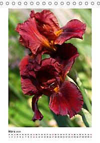 Traumhafte Iris (Tischkalender 2019 DIN A5 hoch) - Produktdetailbild 3