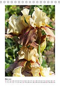 Traumhafte Iris (Tischkalender 2019 DIN A5 hoch) - Produktdetailbild 5
