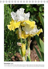 Traumhafte Iris (Tischkalender 2019 DIN A5 hoch) - Produktdetailbild 11