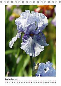 Traumhafte Iris (Tischkalender 2019 DIN A5 hoch) - Produktdetailbild 9