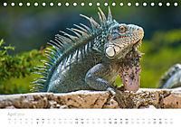 Trauminsel Curaçao (Tischkalender 2019 DIN A5 quer) - Produktdetailbild 4