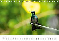 Trauminsel Curaçao (Tischkalender 2019 DIN A5 quer) - Produktdetailbild 7