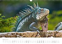 Trauminsel Curaçao (Wandkalender 2019 DIN A3 quer) - Produktdetailbild 4