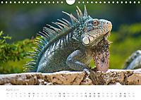 Trauminsel Curaçao (Wandkalender 2019 DIN A4 quer) - Produktdetailbild 4