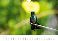 Trauminsel Curaçao (Wandkalender 2019 DIN A4 quer) - Produktdetailbild 7