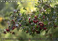Traumland Teufelsmoor (Tischkalender 2019 DIN A5 quer) - Produktdetailbild 7