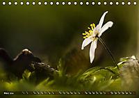 Traumland Teufelsmoor (Tischkalender 2019 DIN A5 quer) - Produktdetailbild 3