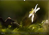 Traumland Teufelsmoor (Wandkalender 2019 DIN A2 quer) - Produktdetailbild 3