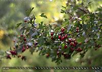 Traumland Teufelsmoor (Wandkalender 2019 DIN A2 quer) - Produktdetailbild 7