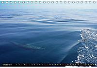 Traumziele weltweit - Bocas del Toro (Tischkalender 2019 DIN A5 quer) - Produktdetailbild 10