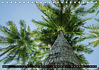 Tropenfeeling - Fernwehbaum Kokospalme (Tischkalender 2019 DIN A5 quer) - Produktdetailbild 5