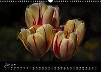 Tulips Floral Impressions (Wall Calendar 2019 DIN A3 Landscape) - Produktdetailbild 6