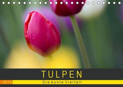 Tulpen - die bunte Vielfalt (Tischkalender 2019 DIN A5 quer), Peter Schürholz