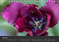 Tulpen - die bunte Vielfalt (Tischkalender 2019 DIN A5 quer) - Produktdetailbild 6