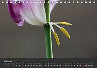 Tulpen - die bunte Vielfalt (Tischkalender 2019 DIN A5 quer) - Produktdetailbild 7