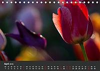 Tulpen - die bunte Vielfalt (Tischkalender 2019 DIN A5 quer) - Produktdetailbild 4