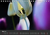 Tulpen - die bunte Vielfalt (Tischkalender 2019 DIN A5 quer) - Produktdetailbild 5