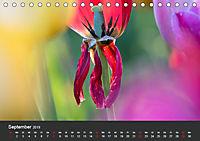 Tulpen - die bunte Vielfalt (Tischkalender 2019 DIN A5 quer) - Produktdetailbild 9