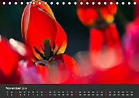 Tulpen - die bunte Vielfalt (Tischkalender 2019 DIN A5 quer) - Produktdetailbild 11